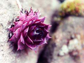 Blossom Rock