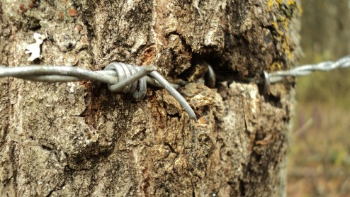 barbed-wire-114363_1280