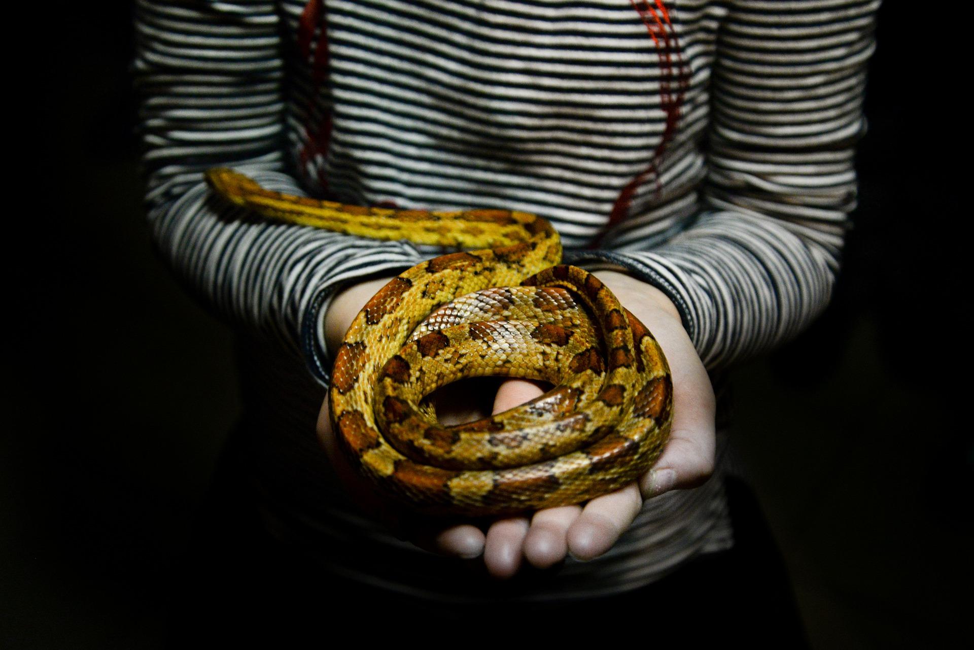 snake-3064737_1920